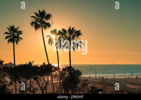 Palm trees on Manhattan Beach at sunset, California. - Stock Photo