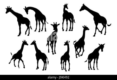 A high quality giraffe animal silhouette set - Stock Photo