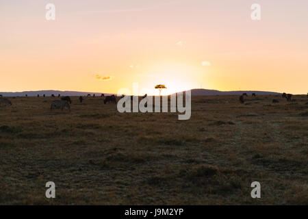 group of herbivore animals in savannah at africa - Stock Photo