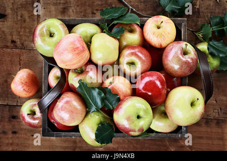 Freshly picked bushel of apples in an old vintage wooden crate with leather handles on a rustic wood table. Image - Stock Photo