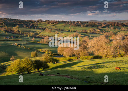 Warm evening light of the golden hour over fields, farmland and moors of a valley in the Staffordshire Peak District - Stock Photo