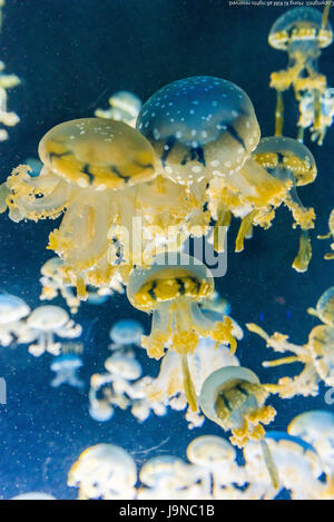 Jelly Fish  in deep blue background 2 - Stock Photo