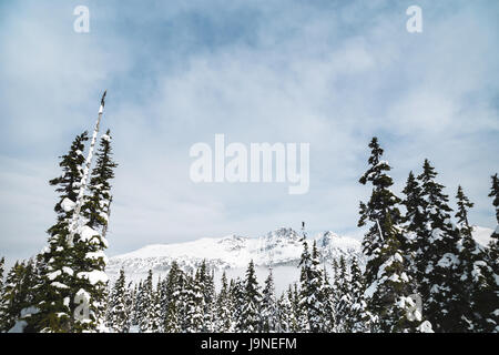 Blackcomb Mountain seen through the trees from Whistler. - Stock Photo