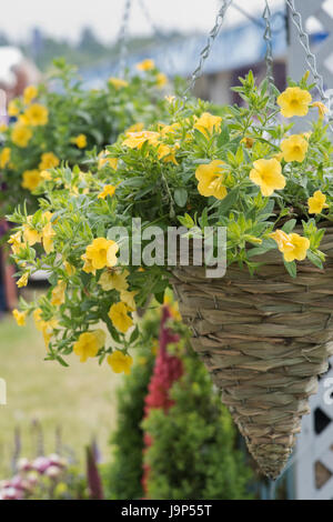 Calibrachoa. Petunia Million Bells flowers in a conical hanging basket at a flower show. UK - Stock Photo
