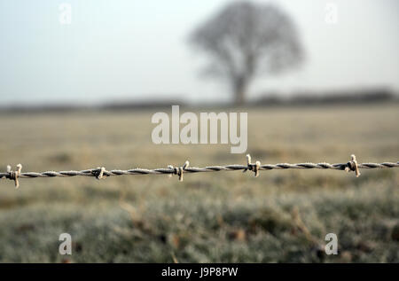 Frosty morning with frost on barbed wire fence on track past Pemsey Farm off Lees Road, Brabourne Lees, Ashford, - Stock Photo