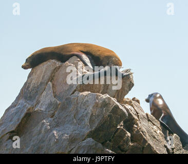 Two Sea Lions resting on Pinnacle rock at Lands End in Cabo San Lucas Baja Mexico BCS - Stock Photo