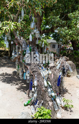 Empty liquore bottles hanging from a tree on St Kitts - Stock Photo
