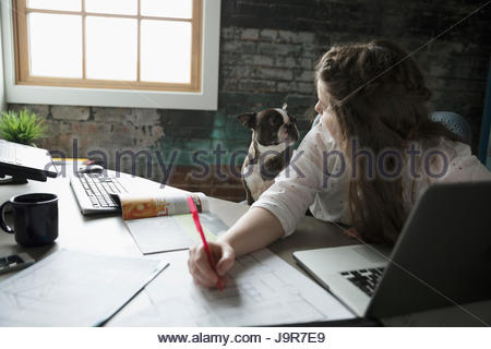 Female architect working, looking over shoulder at dog in office - Stock Photo