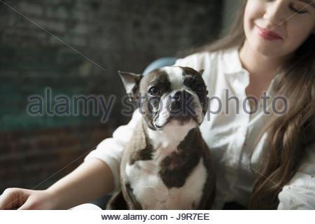 Portrait French bulldog sitting in lap of businesswoman - Stock Photo