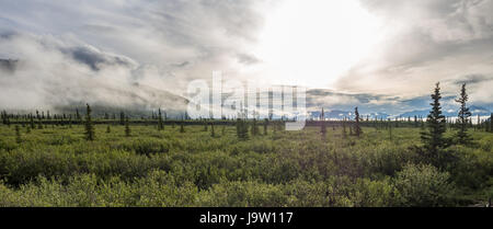 Panoramic view of sunrise over Denali National Park from park road in August with foggy mountains and glistening - Stock Photo