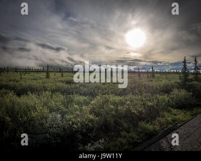 View of sunrise over Denali National Park from park road in August with foggy mountains and glistening dew on low - Stock Photo