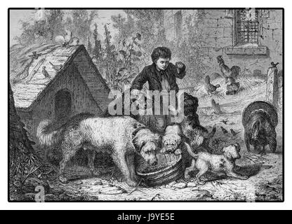 XIX century illustration, country life: boy feeding dogs surrounded by farm animals - Stock Photo