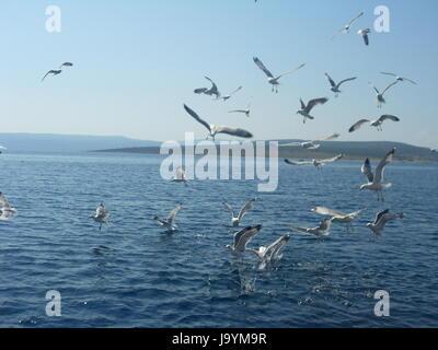 gulls in flight - Stock Photo