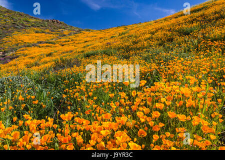 The spring poppy fields in Walker Canyon near Lake Elsinore, California, USA. - Stock Photo