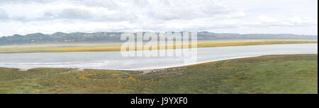 Panoramic view of Carrizo Plain, Soda Lake with wild flower super bloom with mountain range and sky in background. - Stock Photo