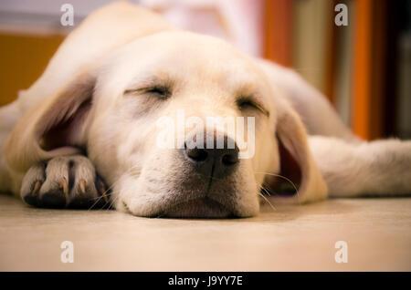 beautiful, beauteously, nice, relaxation, animal, pet, mammal, playful, - Stock Photo