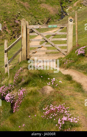 UK, Wales, Pembrokeshire, St Davids, Nine Wells, wooden gate on Coast path to protect livestock - Stock Photo