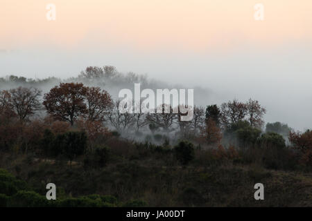 Autumn trees in the midst of fog at sunset - Stock Photo