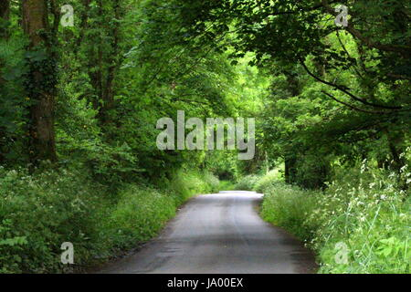 A rural scene of a country lane stretching out into the distance, with surrounding lush foliage and trees - Stock Photo