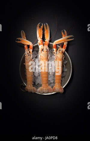 Fresh raw lobsters on ice, top view shot on black background, light painting technique. - Stock Photo