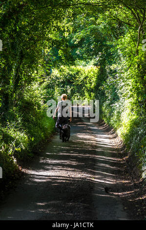 Batheaston, Somerset, England, UK weather. 4th June 2017. An early morning dog walker walks along a tunnel of green - Stock Photo
