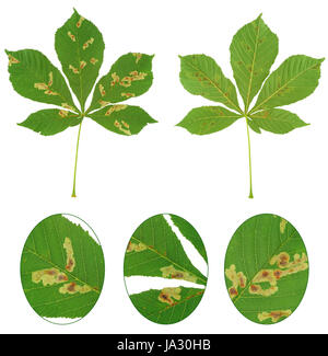 close, food, aliment, leaf, macro, close-up, macro admission, close up view, - Stock Photo