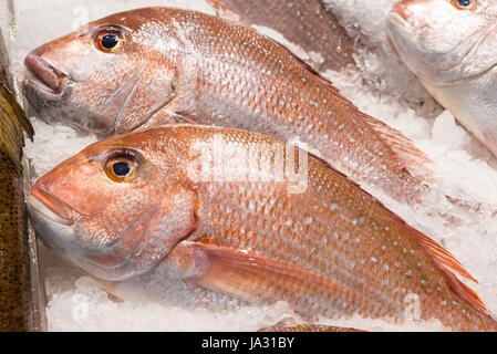 Red Snappers in ice at Sydney Fish Market, New South Wales, Australia - Stock Photo