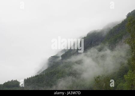 a mountain with many trees on it in the fog - Stock Photo
