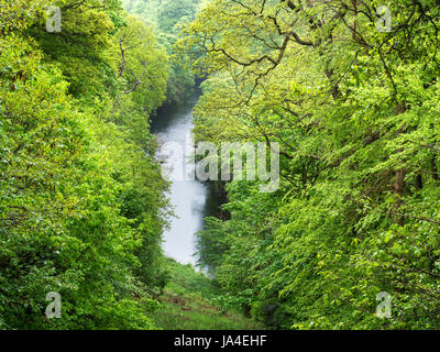 View over the River Wharfe from Harrison's Ford Seat in Strid Wood at Bolton Abbey North Yorkshire England - Stock Photo