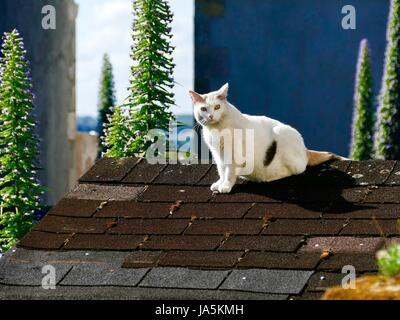Cat, mostly white with black/brown markings, amber eyes, on roof of building. Île de Batz, France - Stock Photo