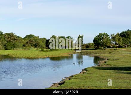Hatchet Pond, near Brockenhurst, New Forest, Hampshire, England UK - Stock Photo