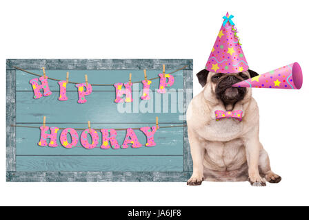 cute pug puppy dog with pink party hat and horn and old  blue wooden sign with festive hip hip hooray banner, isolated - Stock Photo