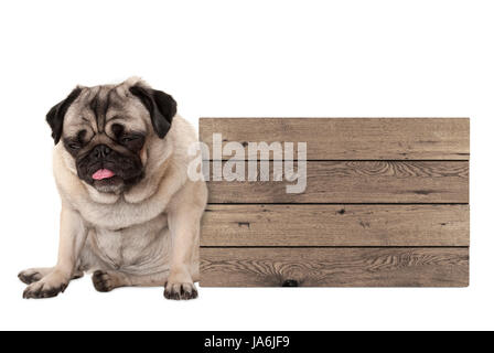 being fed up pug puppy dog sitting down next to blank wooden sign, isolated on white background - Stock Photo