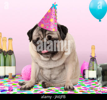 cute pug puppy dog wearing party hat, lying down on confetti, drunk on champagne with hangover, on pink background - Stock Photo