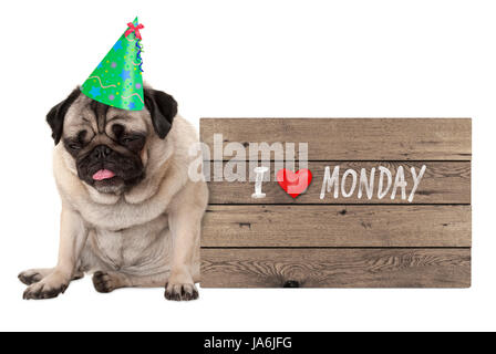 fed up pug puppy dog wearing party hat, sitting down next to wooden sign with text I love monday, isolated on white - Stock Photo