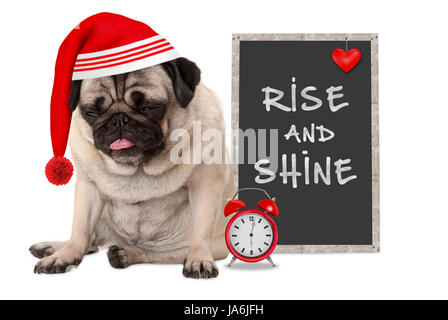 getting up in early morning, grumpy pug puppy dog with red sleeping cap, alarm clock and sign with text rise and - Stock Photo