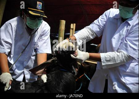 (170824) -- JAKARTA, Aug. 24, 2017 (Xinhua) -- Medical staff check the health condition of a goat at a makeshift - Stock Photo