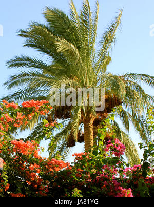 Palm tree at sunset light - Stock Photo