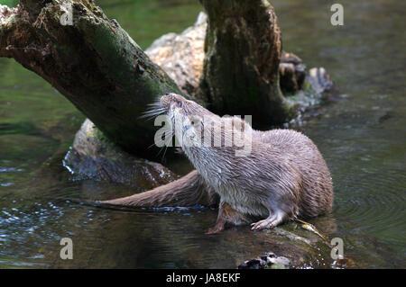 national park, fish, skin, otter, fresh water, pond, water