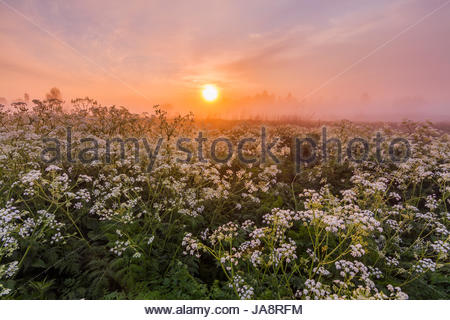 Misty dawn on the river bank with flowers - Stock Photo