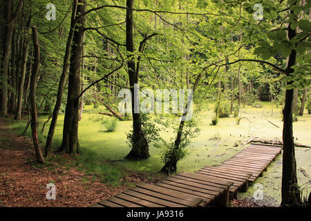 pond in the woods on rgen - Stock Photo