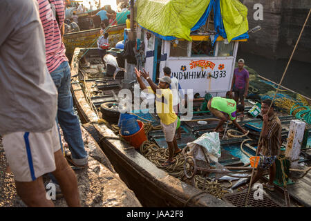 A fisherman throws a large fish up to the quayside from his fishing boat at Sassoon docks, Mumbai, India. - Stock Photo
