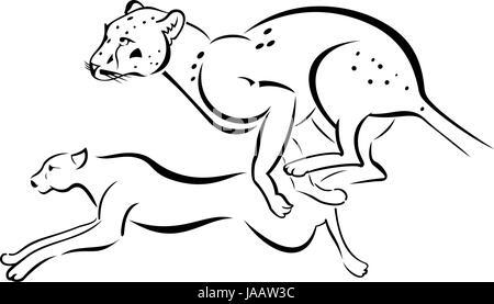 Monochrome illustration of two running Leopard - Stock Photo