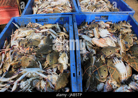 The Dungeness crab, Metacarcinus magister (formerly Cancer magister) at fish market in Digha, West Bengal, India. - Stock Photo