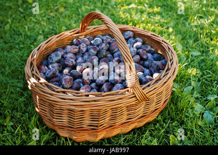 ripe plums in basket on green lawn - Stock Photo