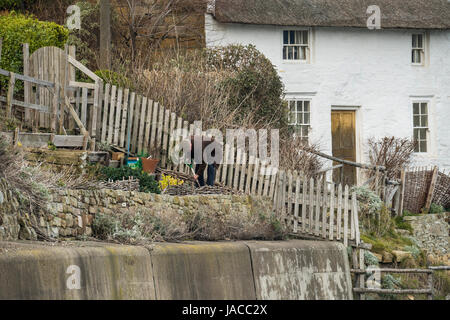 Man gardening in tiny terraced vegetable garden above harbour wall in coastal village, whitewashed thatched cottage - Stock Photo