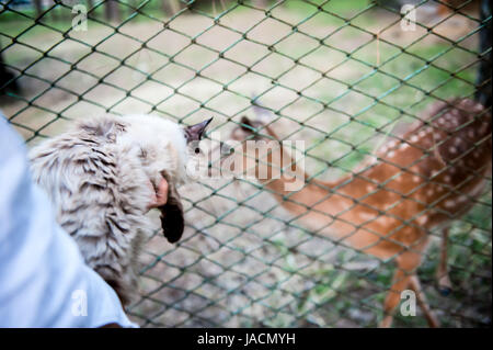 girl feed a deer and keep a furry cat on their hands. The concept of love for animals and pets - Stock Photo