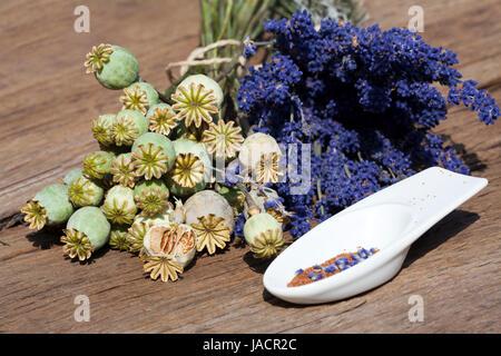 Sommerernte von Lavendelblüten, Schlafmonkapseln und Mohnsamen in einer kleinen Porzellanschale auf einem rustikalem - Stock Photo