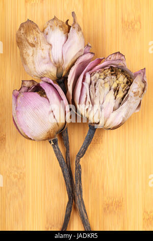 Bouquet of dry lotus flower stock photo 81164633 alamy bouquet of dried lotus stock photo mightylinksfo