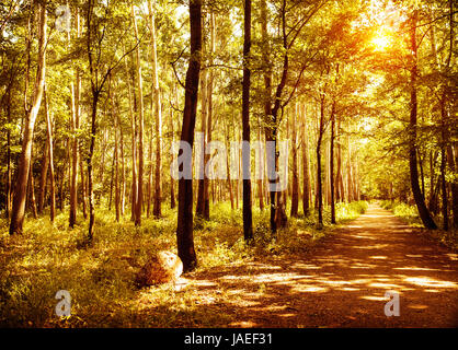 Walkway in autumn park, warm sunny day, beautiful autumnal forest, panoramic landscape, scenic nature of woodland, - Stock Photo